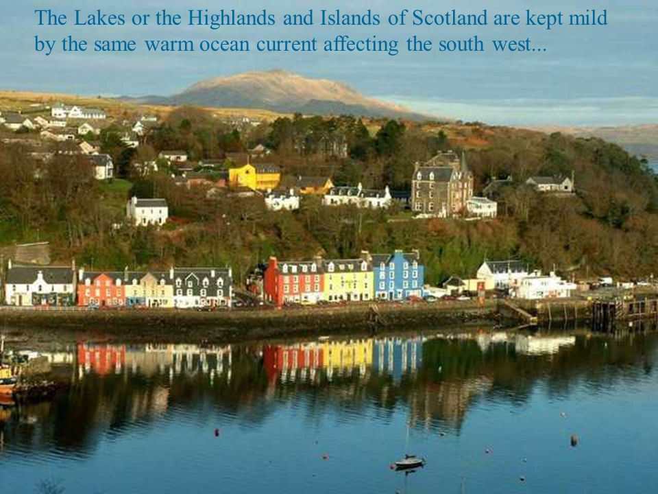 The Lakes or the Highlands and Islands of Scotland are kept mild by the same warm ocean current affecting the south west...