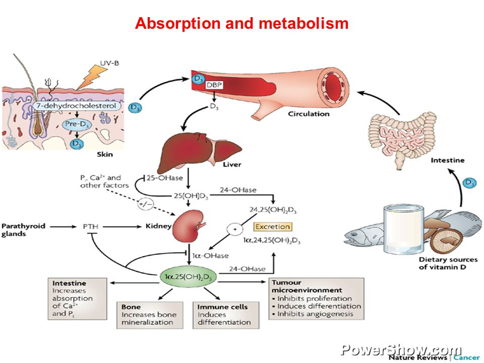 how calcium is absorbed in the body essay Calcium metabolism refers to the movements and regulation of calcium ions (ca2+) in and out of various body compartments, such as the gastrointestinal tract, the blood plasma.