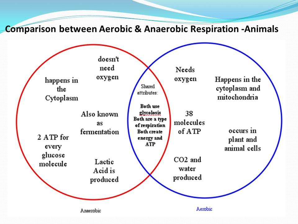 B4 11 Anaerobic Respiration Lactic Acid Fermentation Definition