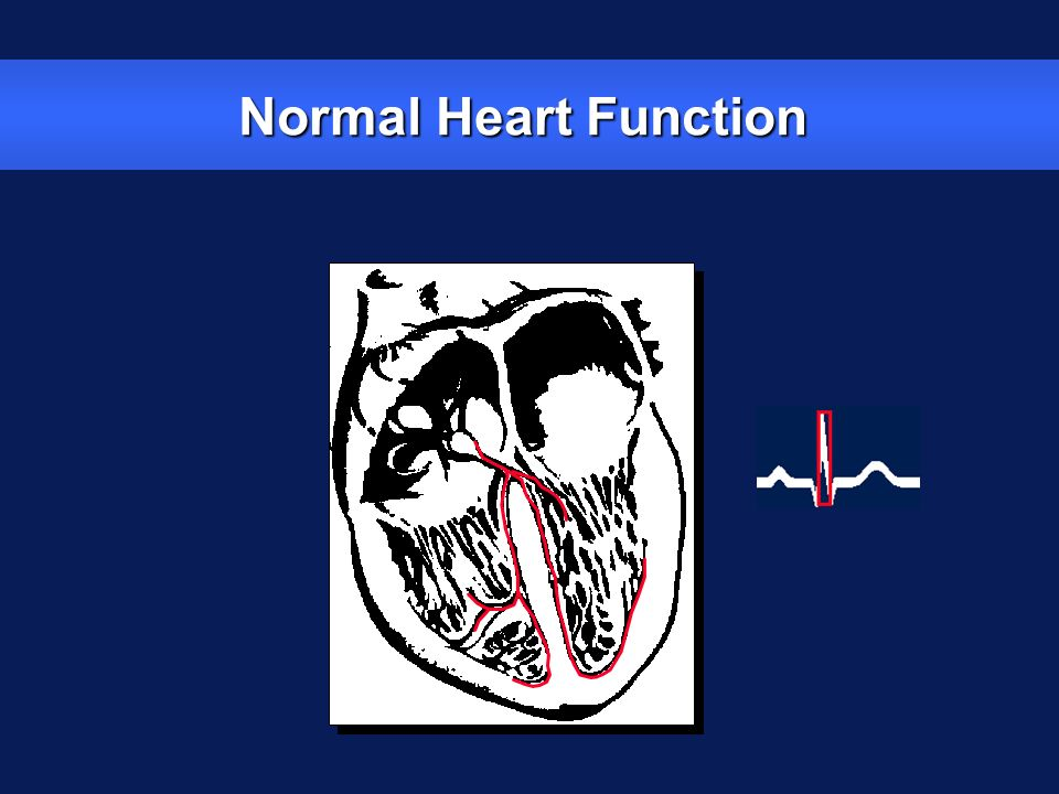 Normal Heart Function