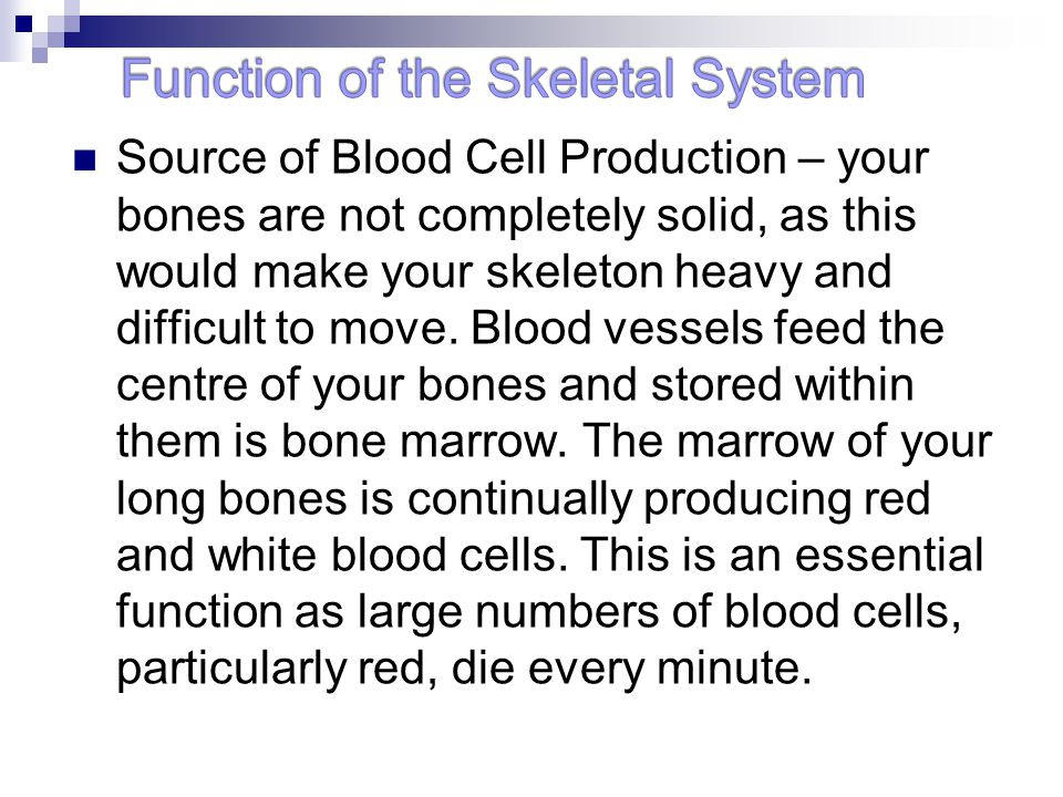 the functions of the skeletal system are