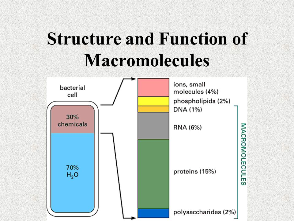 structure and function of biomolecules