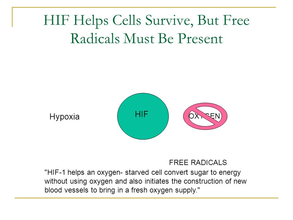 HIF Helps Cells Survive, But Free Radicals Must Be Present