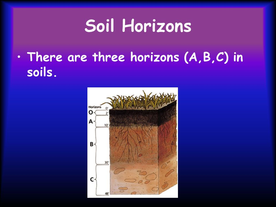 Soil Horizons There are three horizons (A,B,C) in soils.
