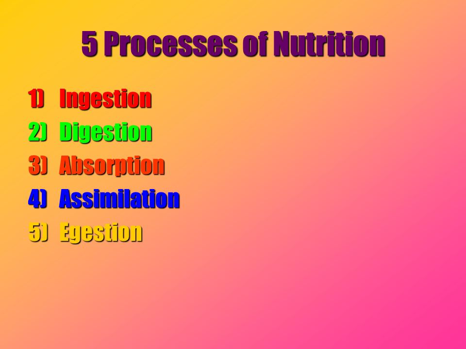 5 Processes of Nutrition