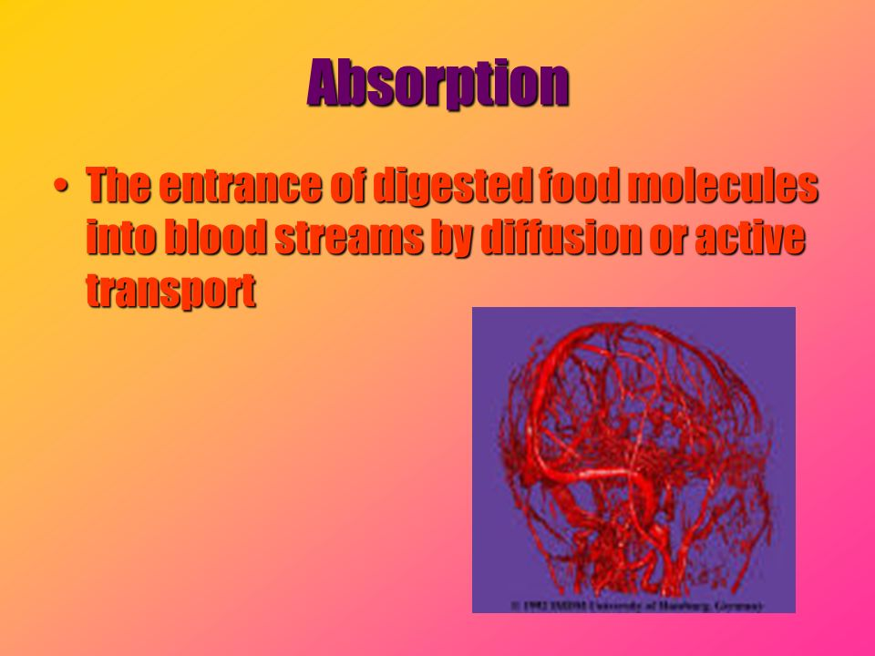 Absorption The entrance of digested food molecules into blood streams by diffusion or active transport.