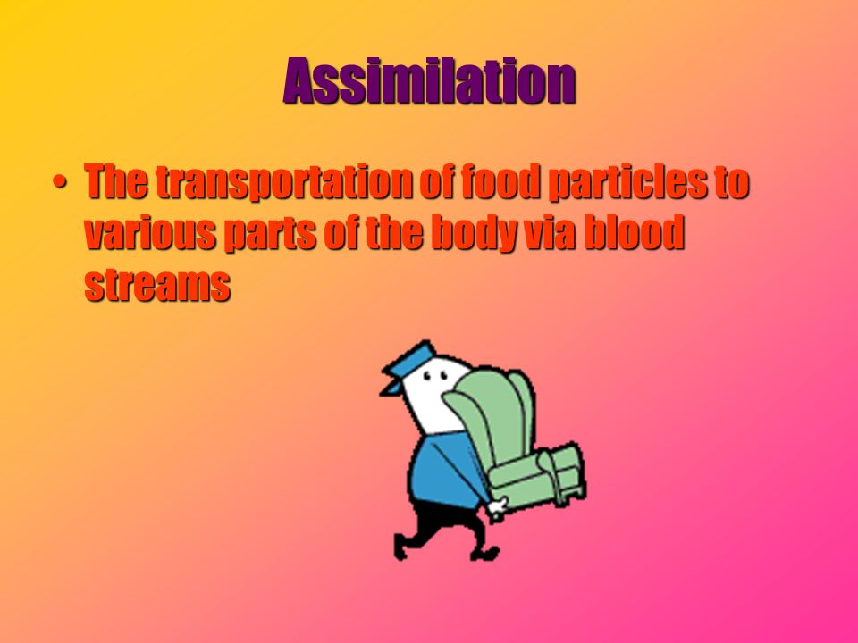 Assimilation The transportation of food particles to various parts of the body via blood streams
