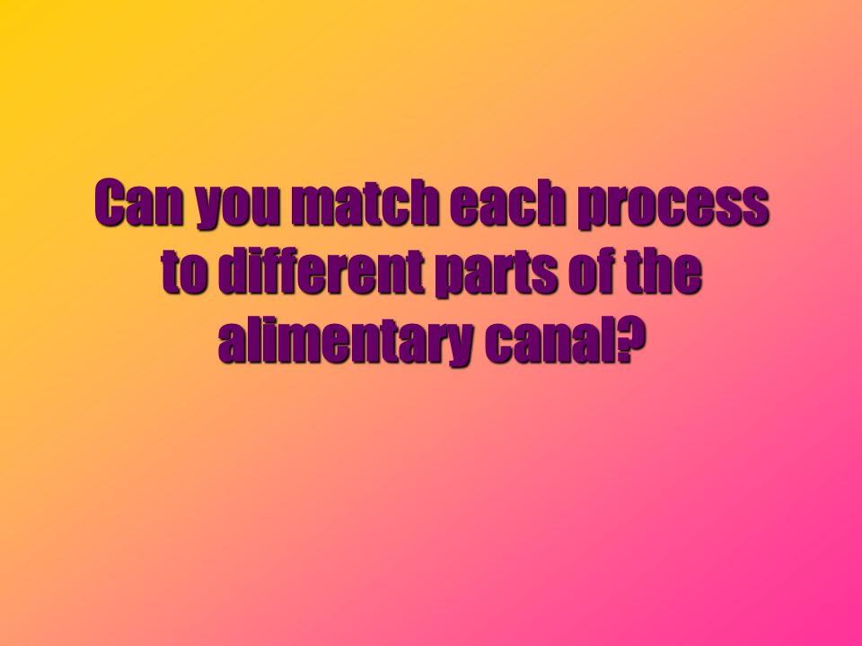 Can you match each process to different parts of the alimentary canal