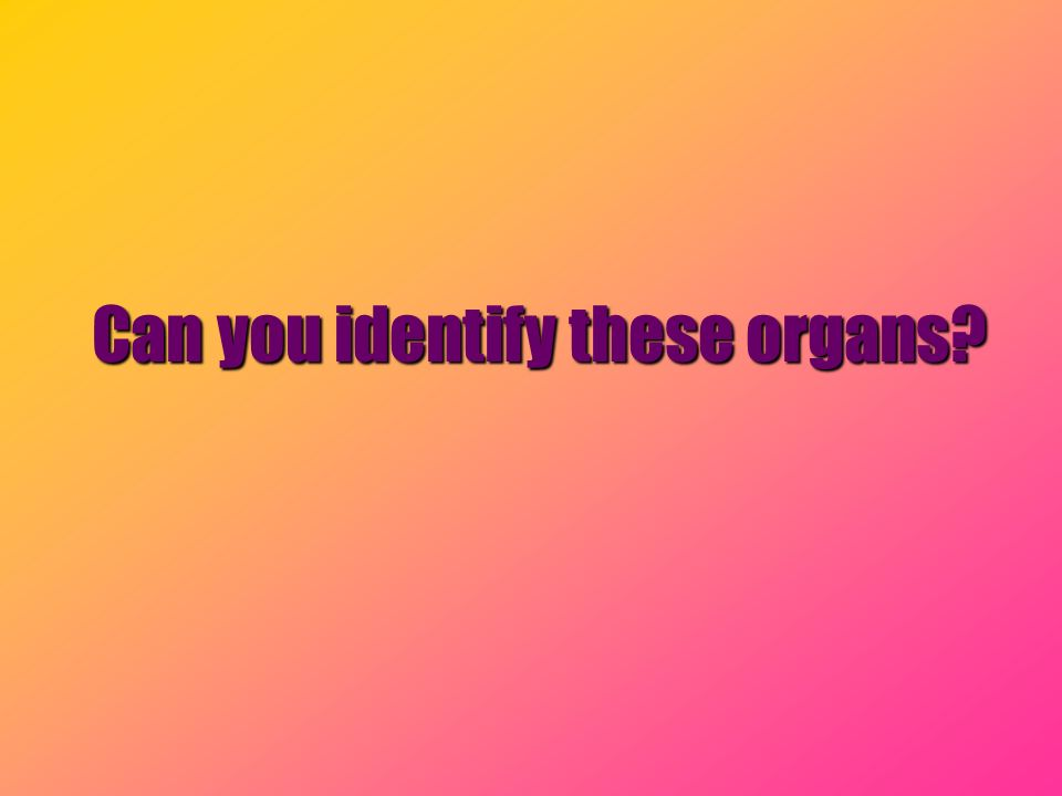 Can you identify these organs