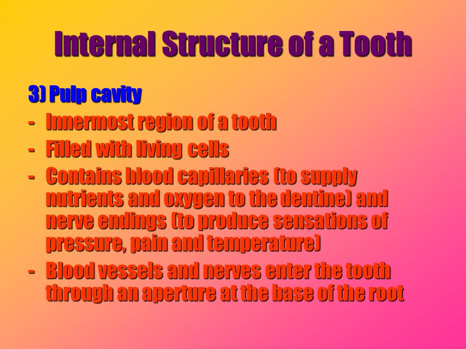 Internal Structure of a Tooth