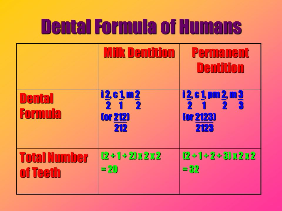 Dental Formula of Humans