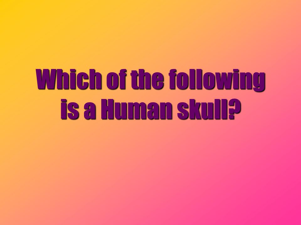 Which of the following is a Human skull