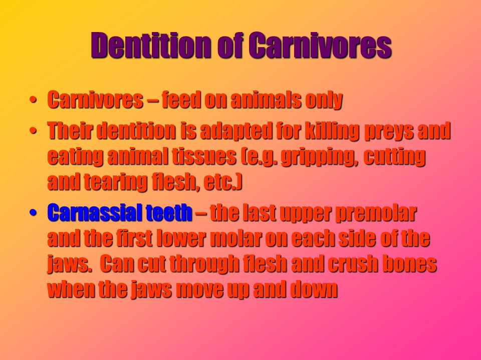 Dentition of Carnivores