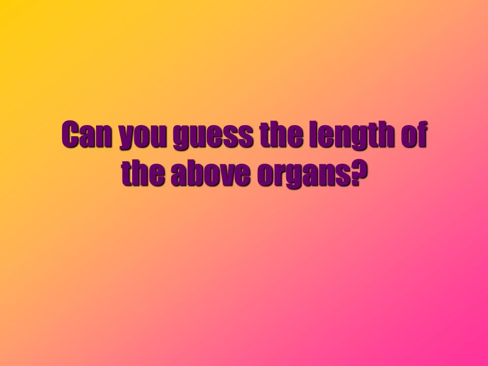 Can you guess the length of the above organs