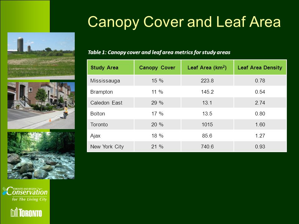 Canopy Cover and Leaf Area