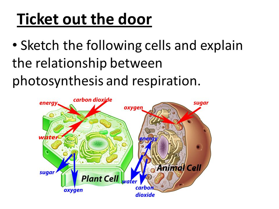 biochemistry of photosynthesis Why biochemistry photosynthesis and respiration in this section you can learn and practice biochemistry questions based on photosynthesis and respiration and.