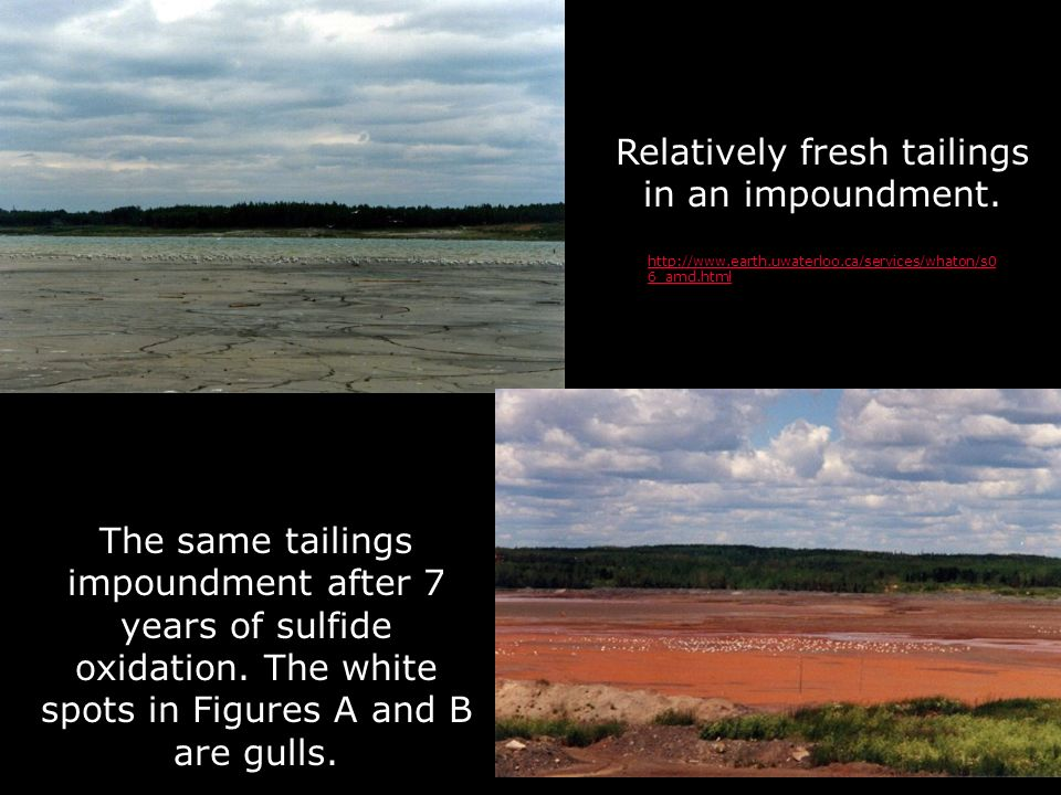 Relatively fresh tailings in an impoundment.