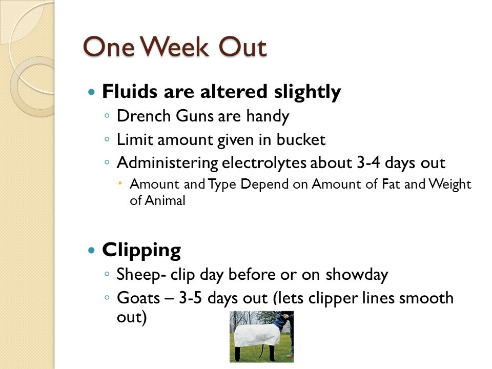 Calhoun County Sheep and Goat Clinic Pt  1I - ppt download