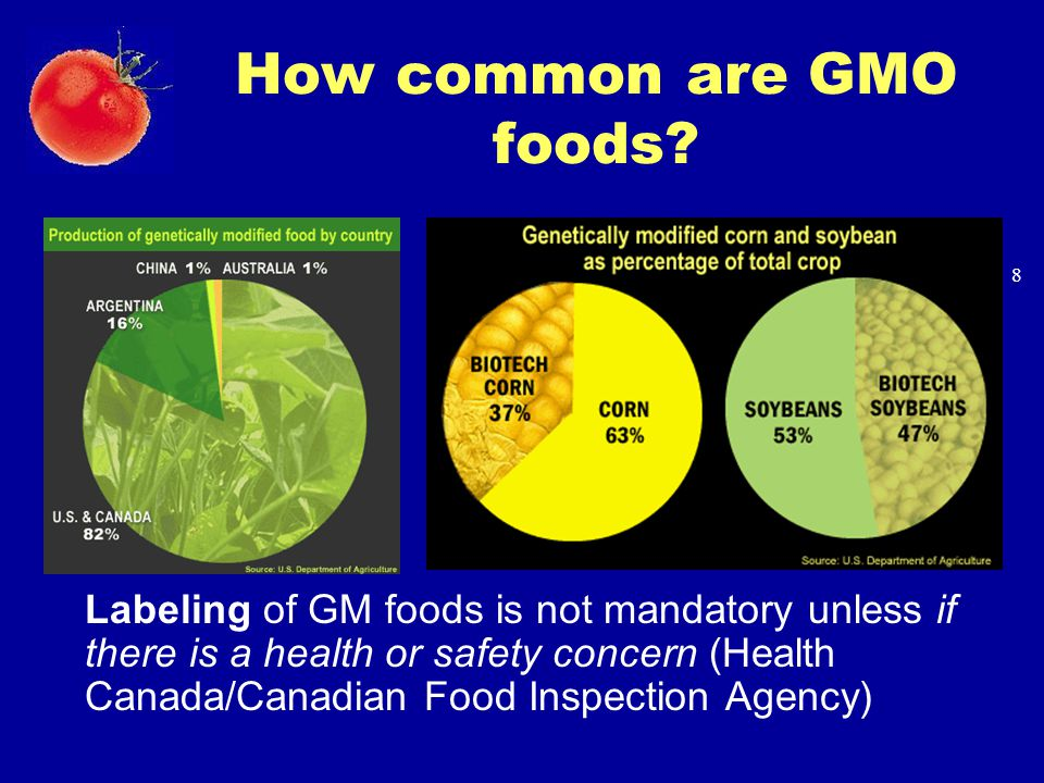 How common are GMO foods