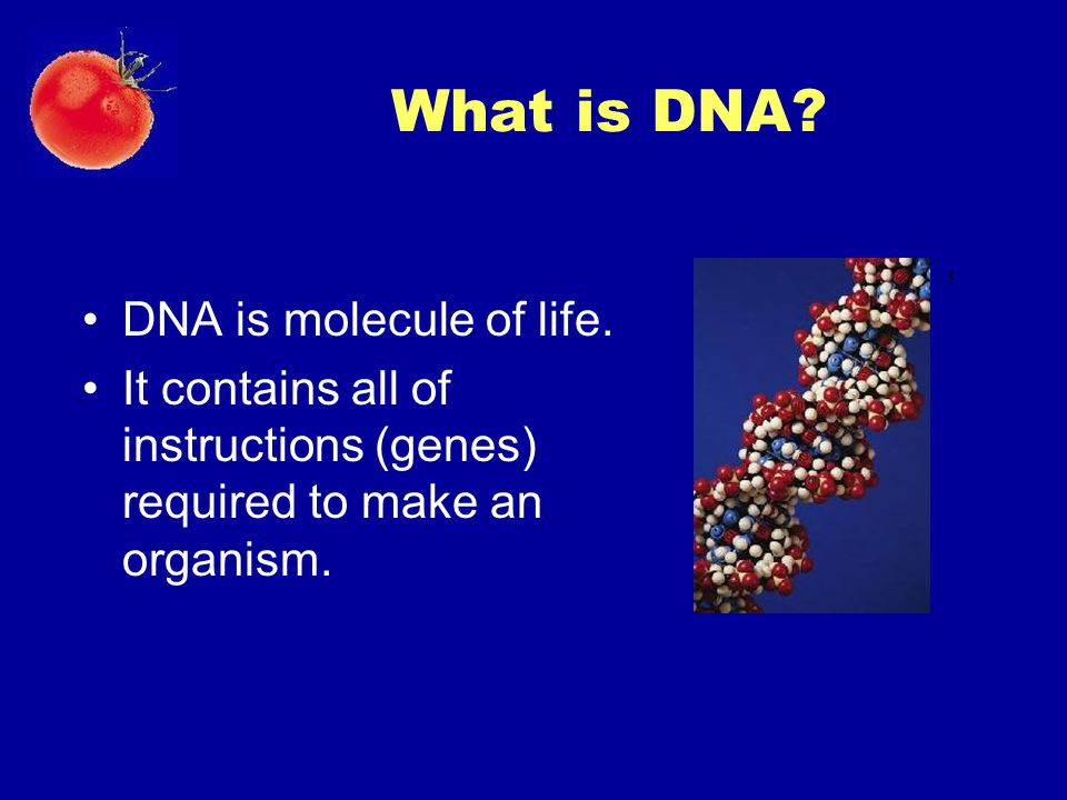 What is DNA DNA is molecule of life.