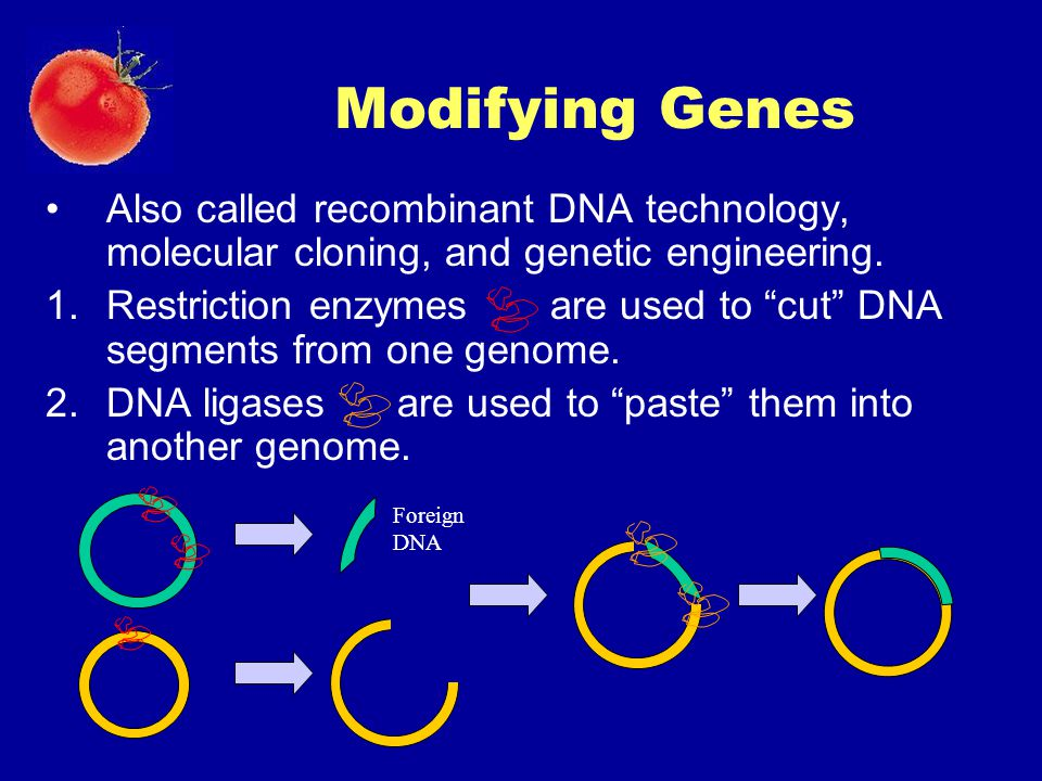 Modifying Genes Also called recombinant DNA technology, molecular cloning, and genetic engineering.