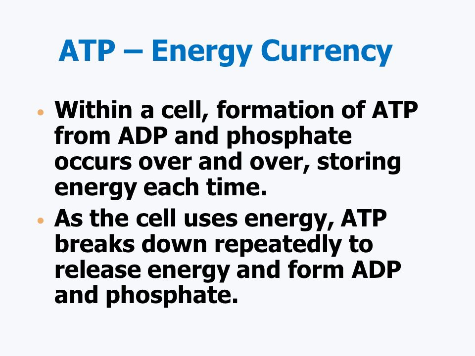 ATP – Energy Currency Within a cell, formation of ATP from ADP and phosphate occurs over and over, storing energy each time.