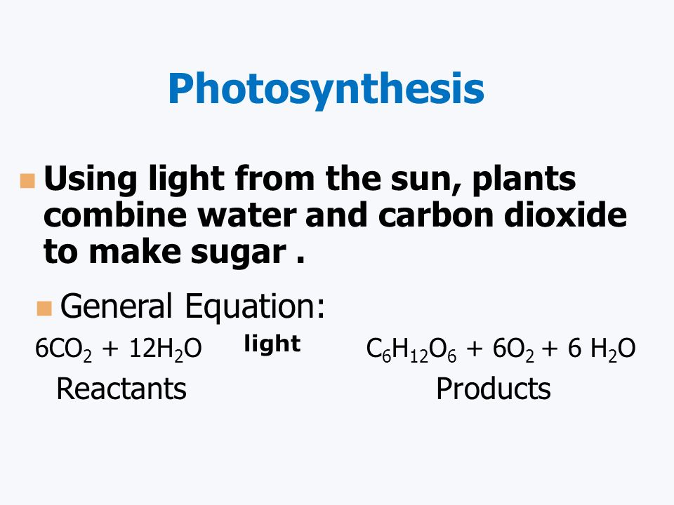 Photosynthesis Using light from the sun, plants combine water and carbon dioxide to make sugar . General Equation: