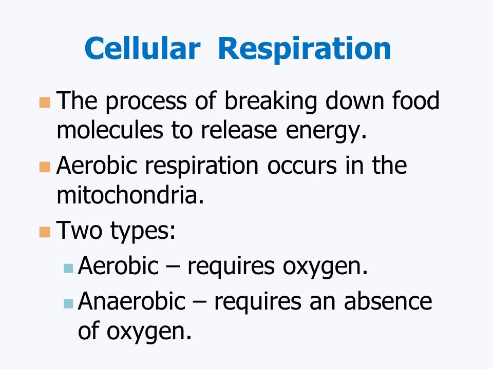 Cellular Respiration The process of breaking down food molecules to release energy. Aerobic respiration occurs in the mitochondria.