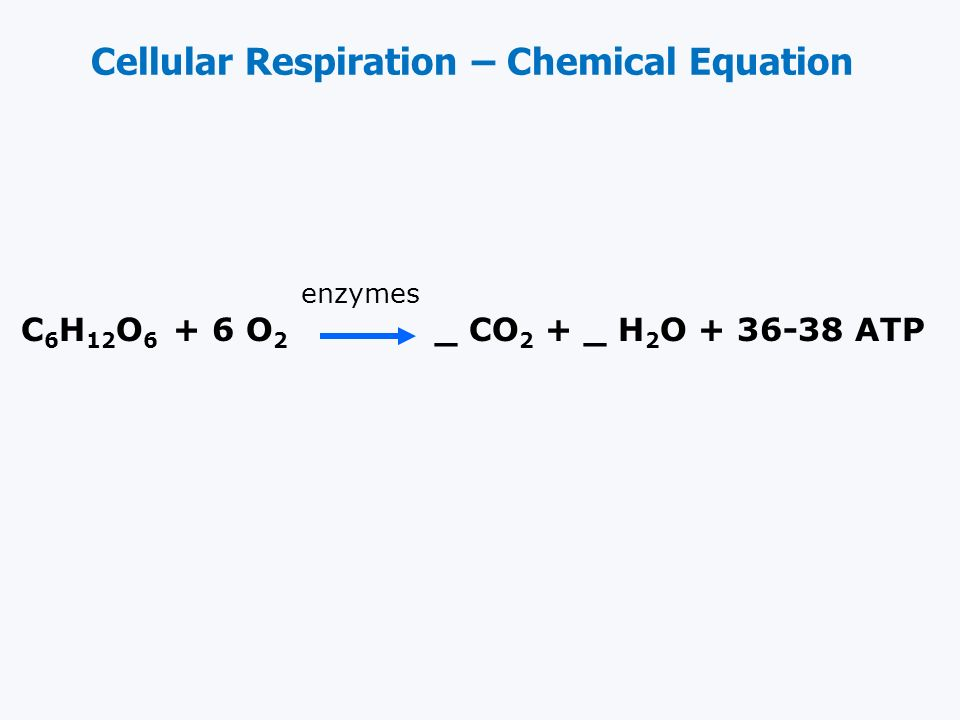 Cellular Respiration – Chemical Equation