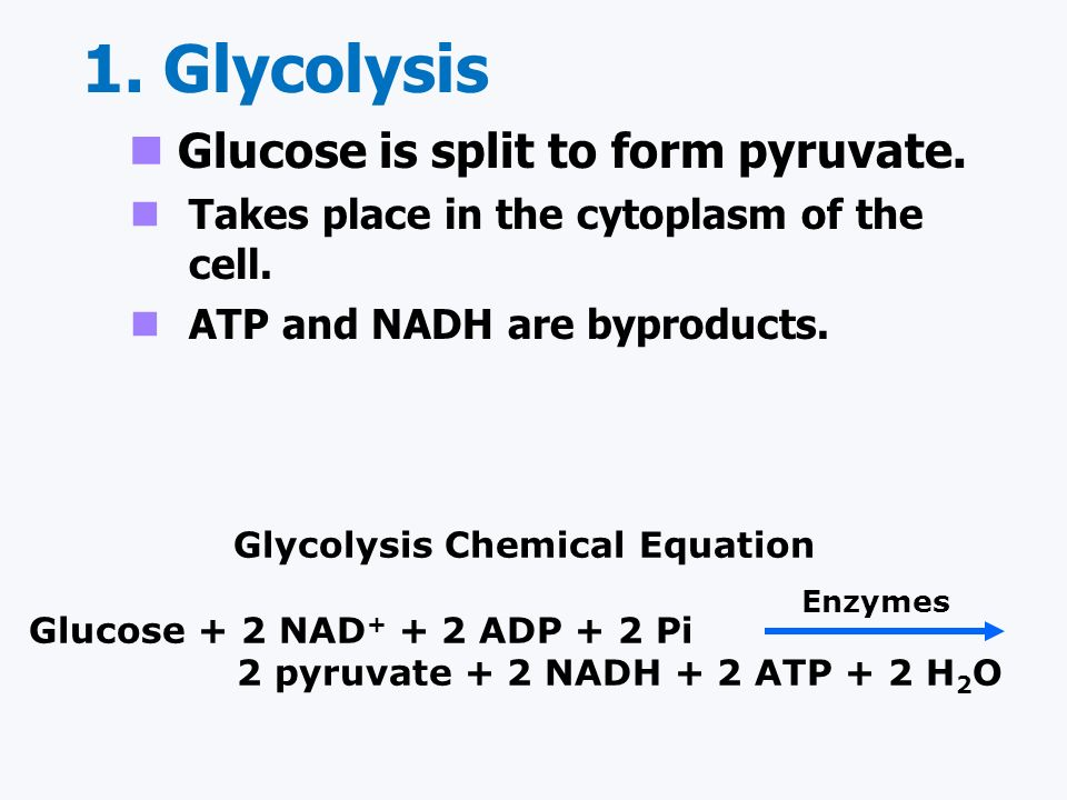Glycolysis Chemical Equation