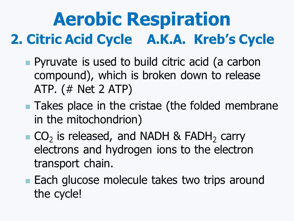 Aerobic Respiration 2. Citric Acid Cycle A.K.A. Kreb's Cycle