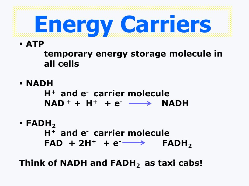 Energy Carriers ATP temporary energy storage molecule in all cells