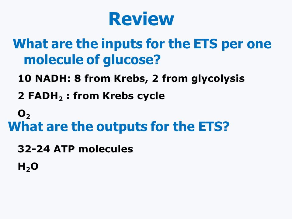 Review What are the inputs for the ETS per one molecule of glucose