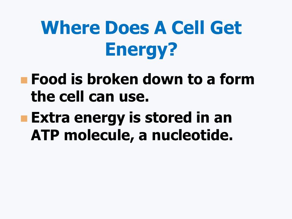 Where Does A Cell Get Energy