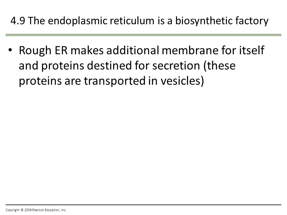 4.9 The endoplasmic reticulum is a biosynthetic factory