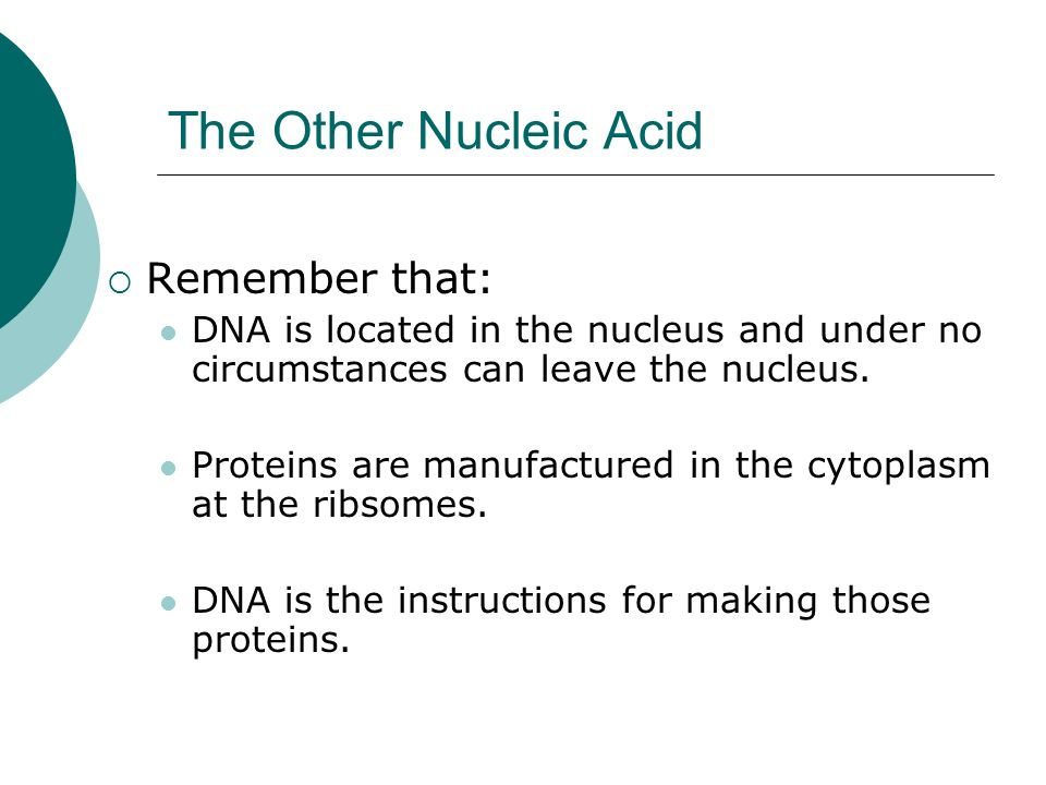 The Other Nucleic Acid Remember that: