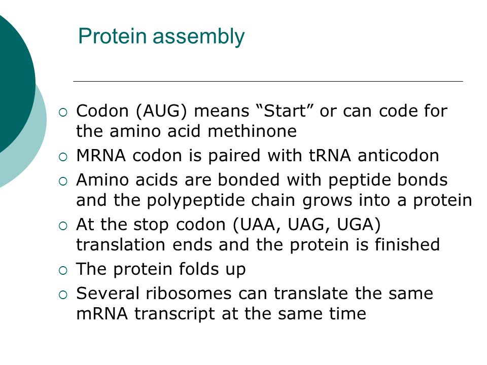Protein assembly Codon (AUG) means Start or can code for the amino acid methinone. MRNA codon is paired with tRNA anticodon.