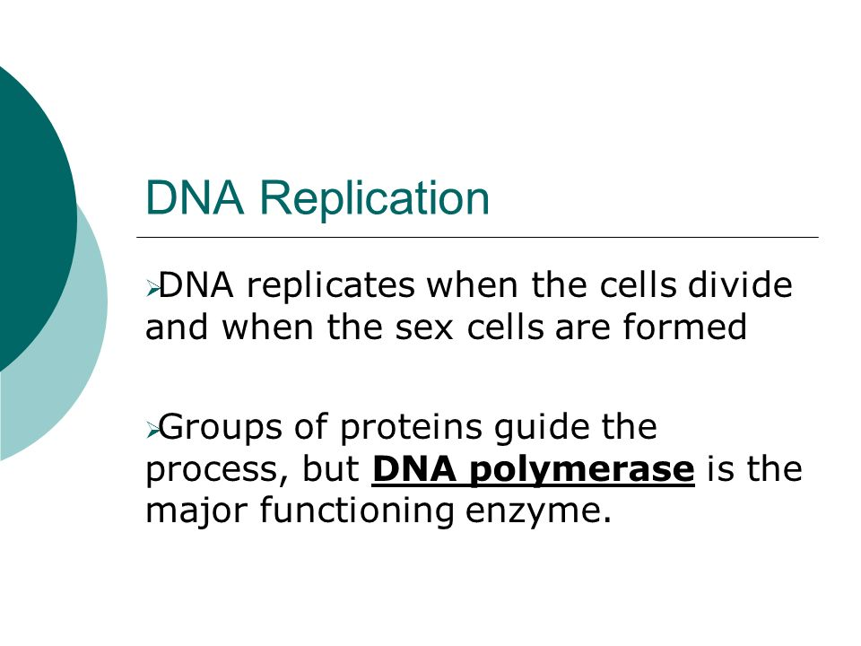 DNA Replication DNA replicates when the cells divide and when the sex cells are formed.