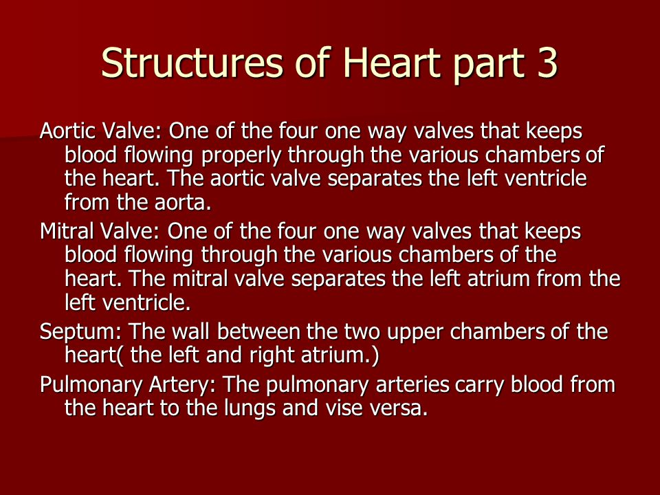 Structures of Heart part 3