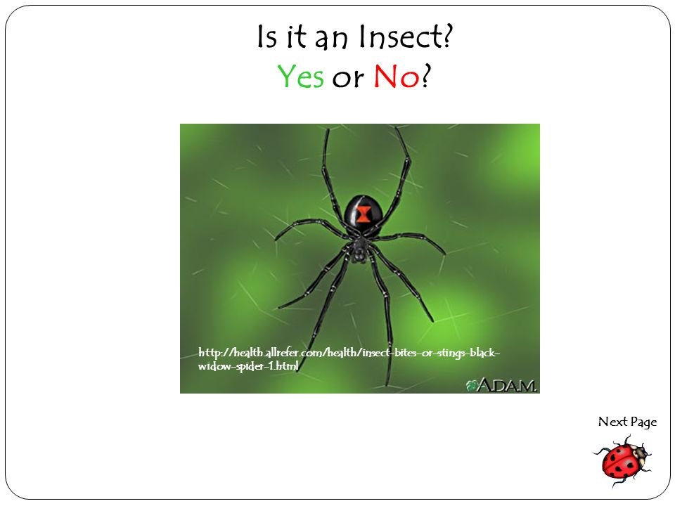 Is it an Insect Yes or No Next Page