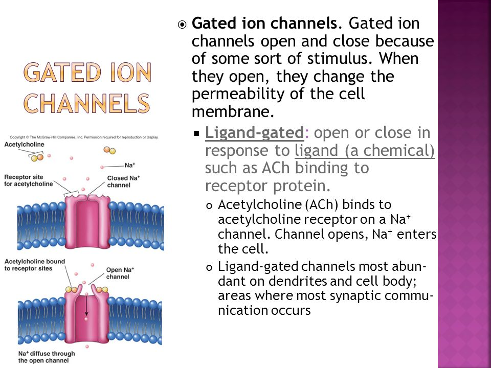 Gated ion channels. Gated ion channels open and close because of some sort of stimulus. When they open, they change the permeability of the cell membrane.