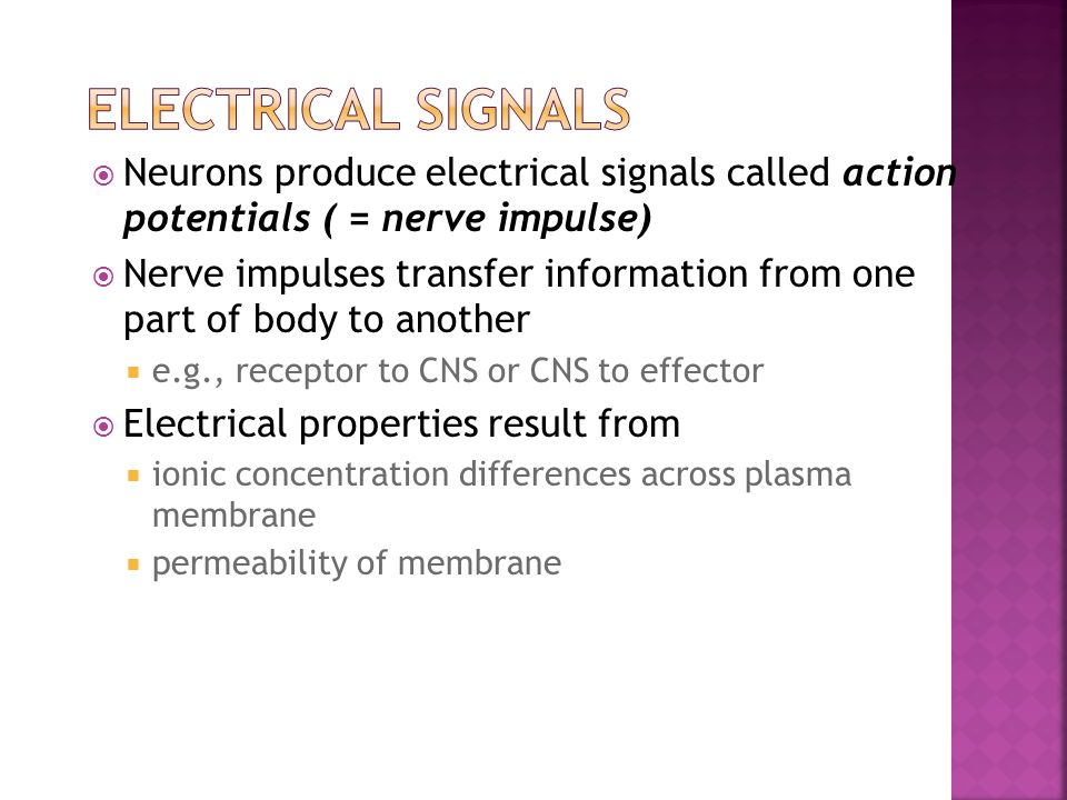 Electrical Signals Neurons produce electrical signals called action potentials ( = nerve impulse)