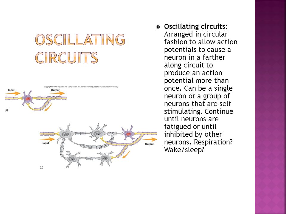 Oscillating circuits: Arranged in circular fashion to allow action potentials to cause a neuron in a farther along circuit to produce an action potential more than once. Can be a single neuron or a group of neurons that are self stimulating. Continue until neurons are fatigued or until inhibited by other neurons. Respiration Wake/sleep