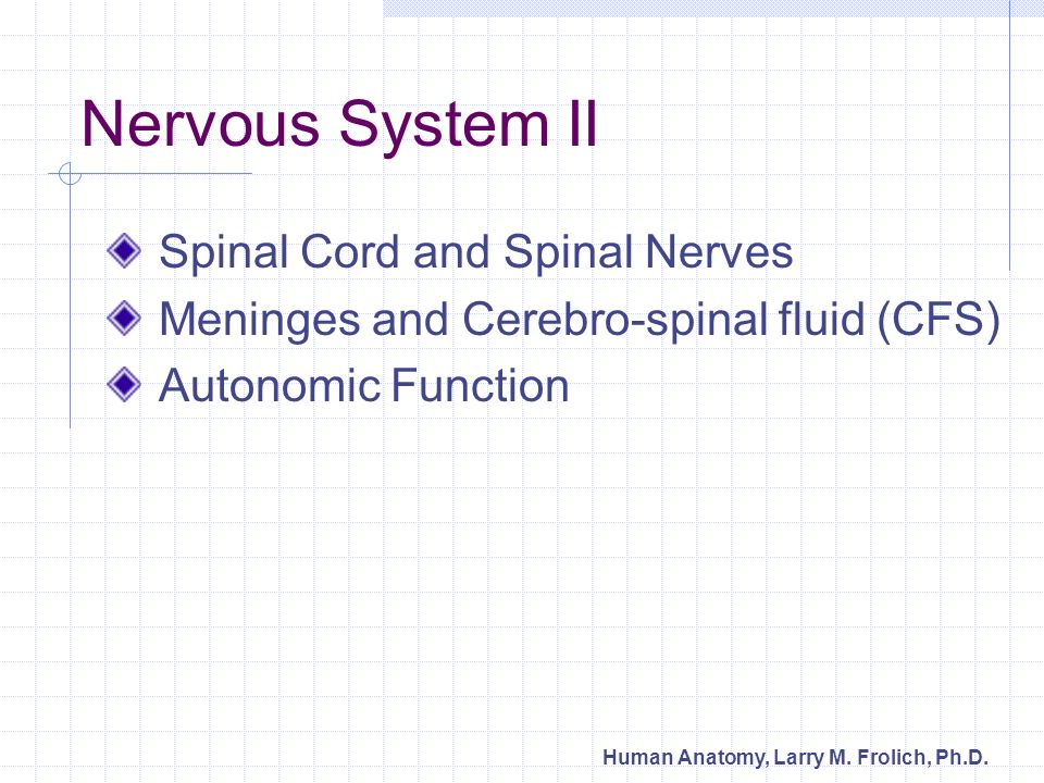 Nervous System II Spinal Cord and Spinal Nerves