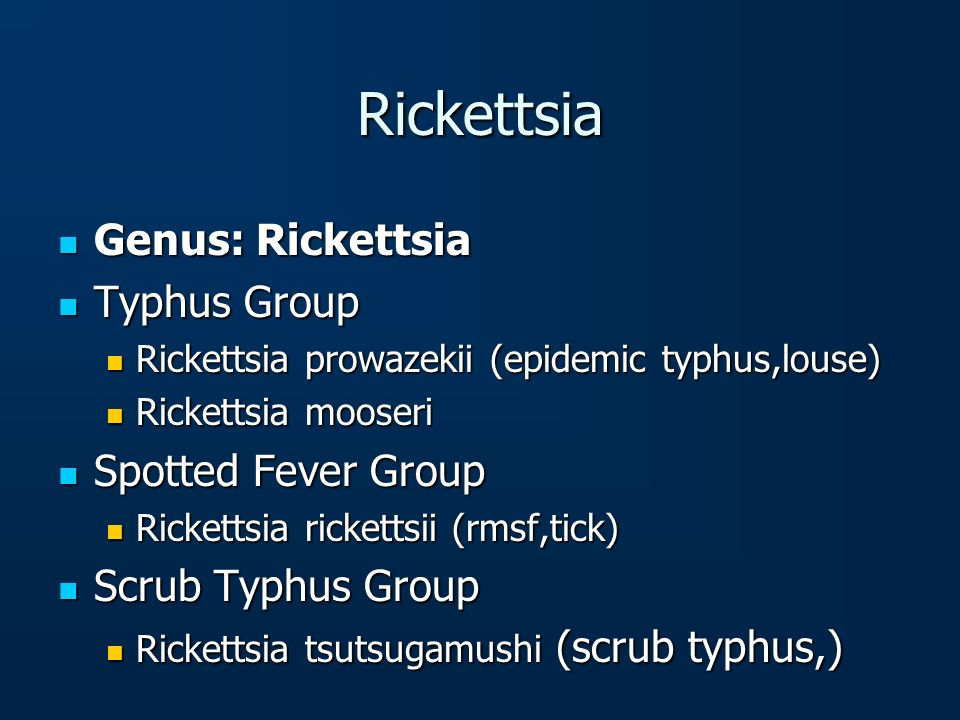 Rickettsia Genus: Rickettsia Typhus Group Spotted Fever Group