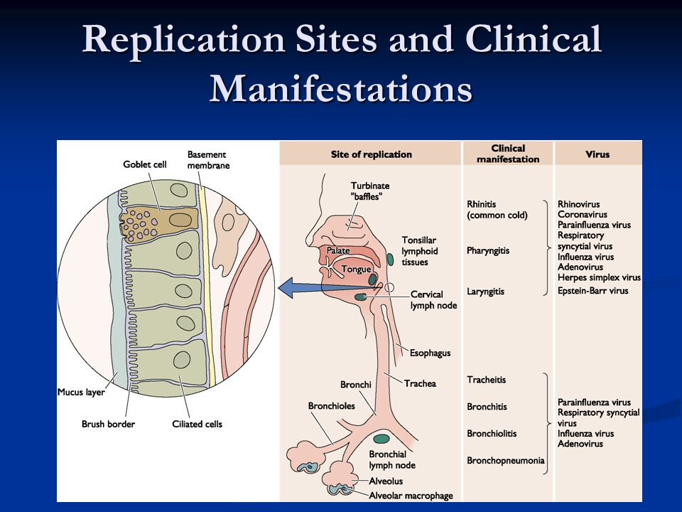 Replication Sites and Clinical Manifestations