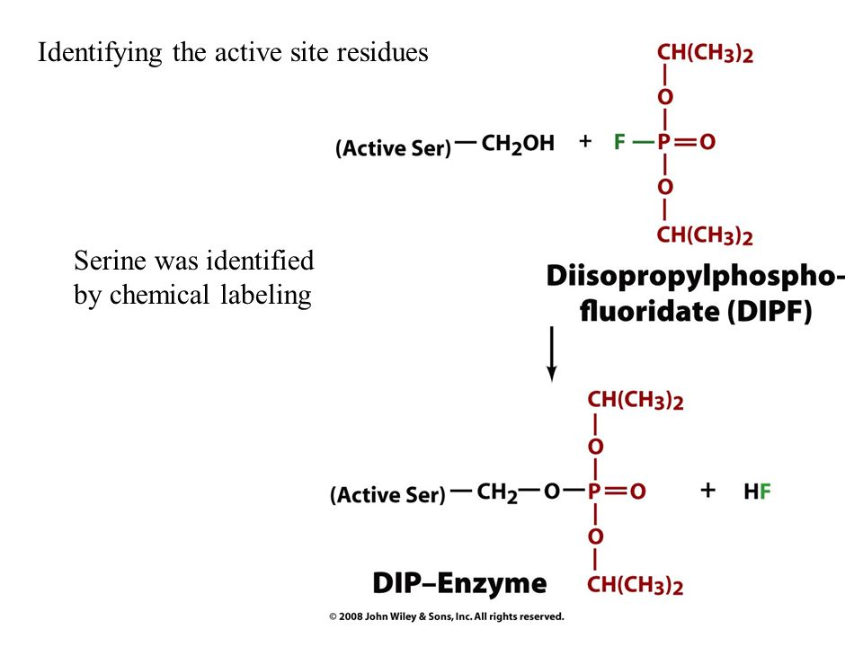 Identifying the active site residues