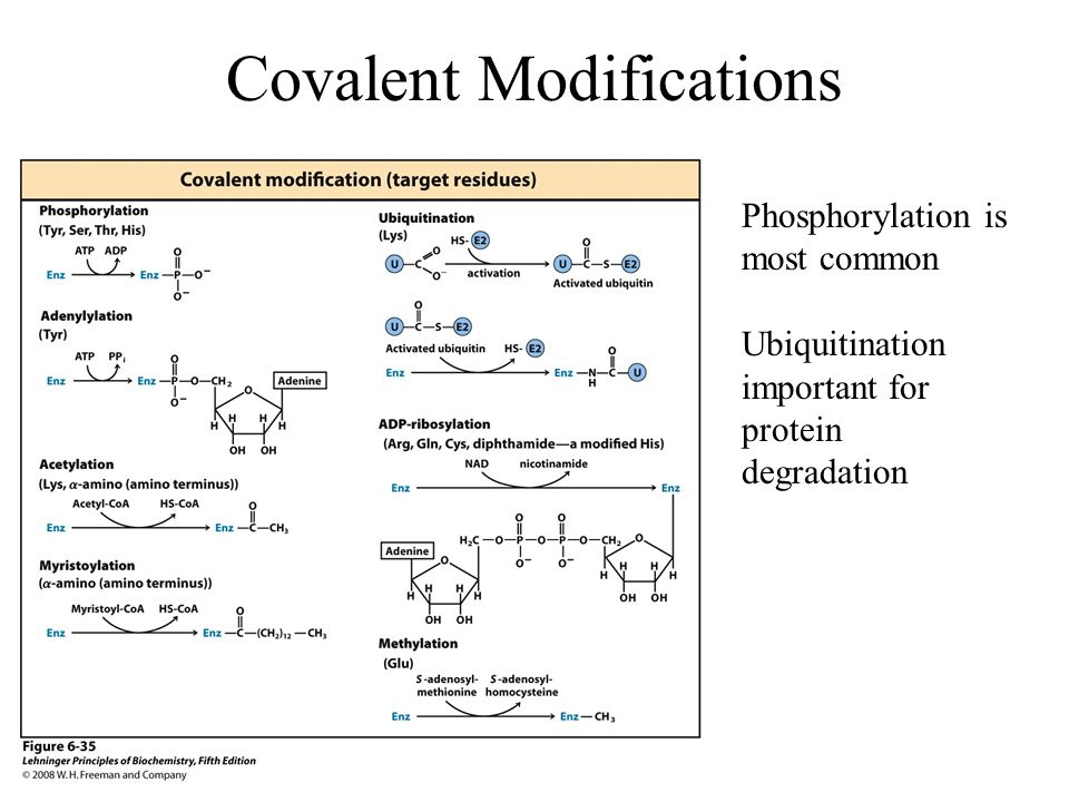Covalent Modifications
