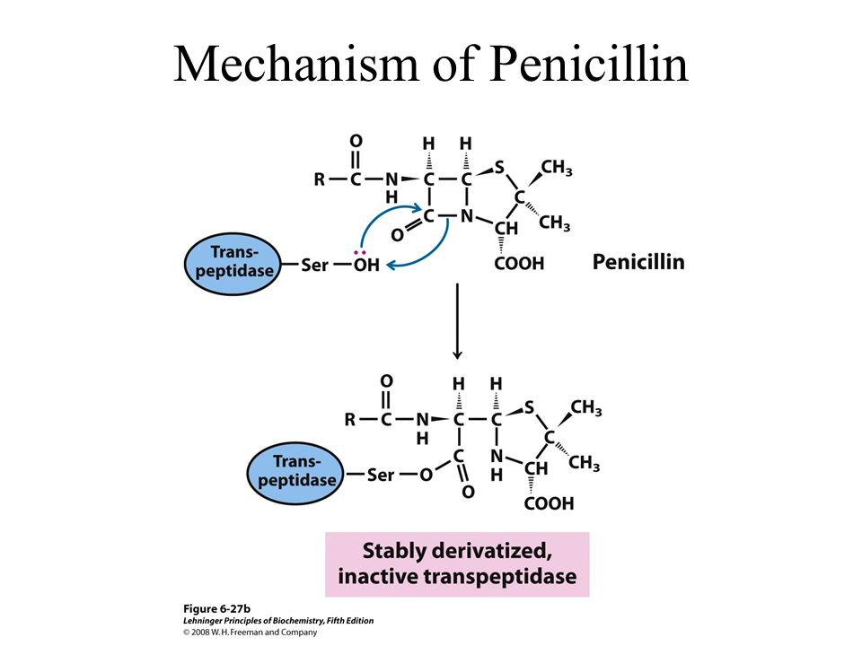 Mechanism of Penicillin