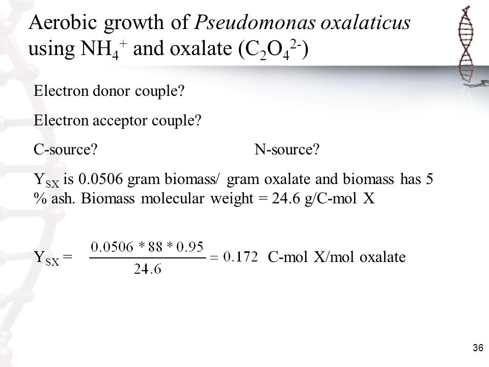 Aerobic growth of Pseudomonas oxalaticus using NH4+ and oxalate (C2O42-)